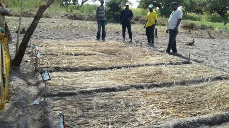 Agricultores de Monapo (Moçambique) desenvolvem trabalho que permite a melhoria da segurança alimentar