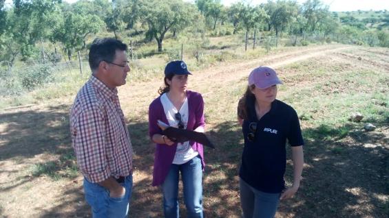 Prosseguem os trabalhos de instalação de plantas em sistema agroflorestal