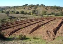 Agricultura para o Futuro - Plantas para o Planeta