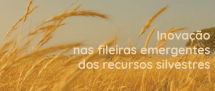 encontros-de-networking-no-alentejo