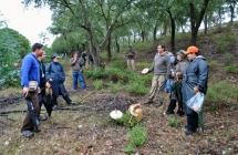Recursos Micológicos – Estratégia para o Desenvolvimento e Promoção da Fileira dos Recursos Micológicos do Baixo Alentejo