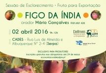 Sessão de Esclarecimento CriAtivos - Exportação de Figo da Índia